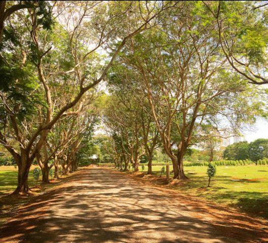 Terreno Panama>Panama>Parque Lefevre - Venta:18.000 US Dollar - codigo: 21-3684