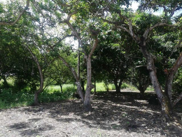 Terreno Panama>Chame>Gorgona - Venta:35.000 US Dollar - codigo: 21-6578
