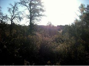 13325 N Trail Blazer Prescott, AZ 86305 - MLS #: 934895