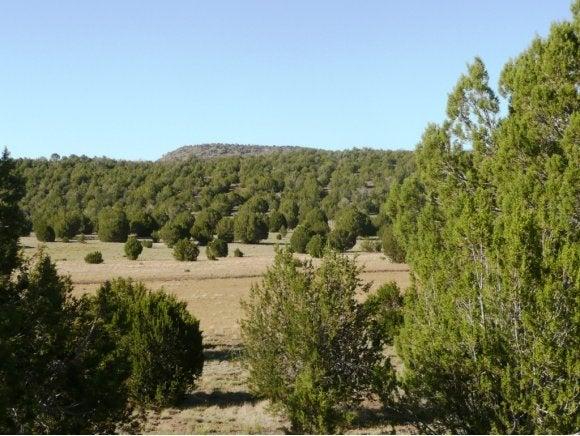 303 Sierra Verde Ranch, Seligman, AZ 86337