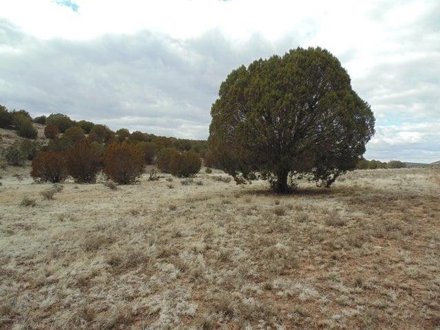 305 Trout Creek Trail, Seligman, AZ 86337