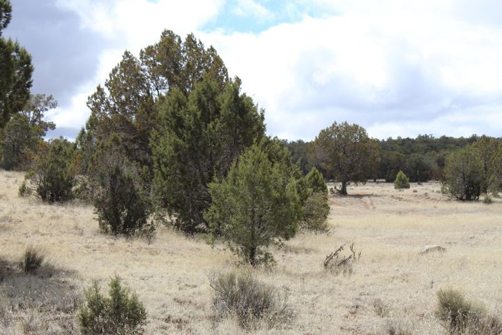 Tbd Antelope Run, Seligman, AZ 86337