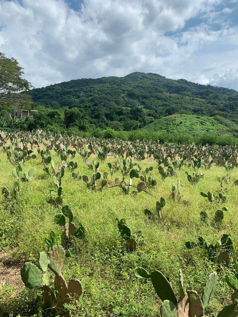 1 acre of nopal ( Mexican edible cactus )