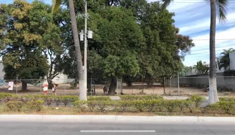 S/N Prisciliano Sánchez, Lote Colibri, Puerto Vallarta, JA