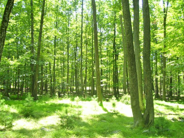 Lot 17-C Wynd Dr, Lakeville, PA 18438