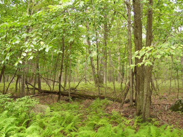 Lot 149 Mountain Top Rd, Lackawaxen, PA 18435