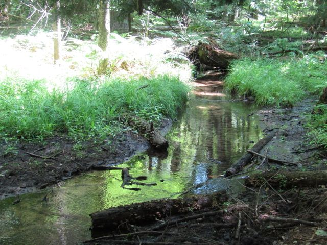 A rapid small stream runs through the southern 1/4 of the 40 Acres. It is flows rapidly, even in August.