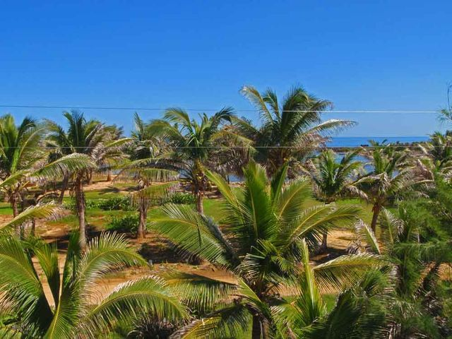Gorgeous palm trees and incredible views to the ocean.