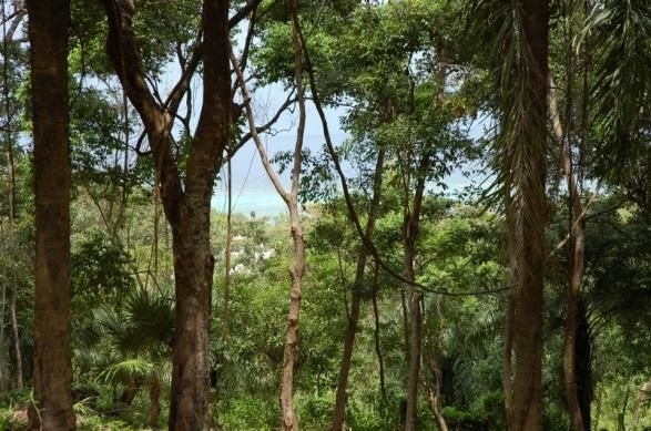 Ocean View through the trees