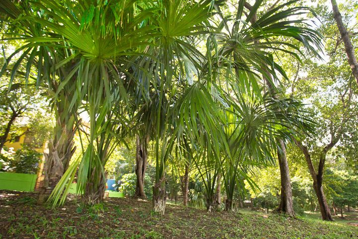 Lawson Rock Lot 89 - Lush tropical trees surround the property