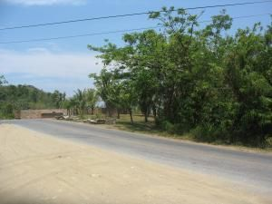 Main Road Parrot Tree Entrance