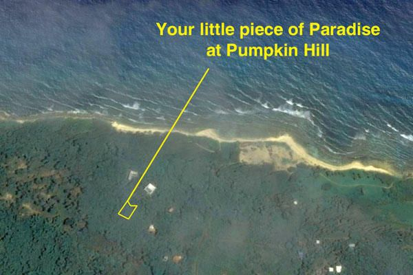 Bargain Price!, Pumpkin Patch, Utila,