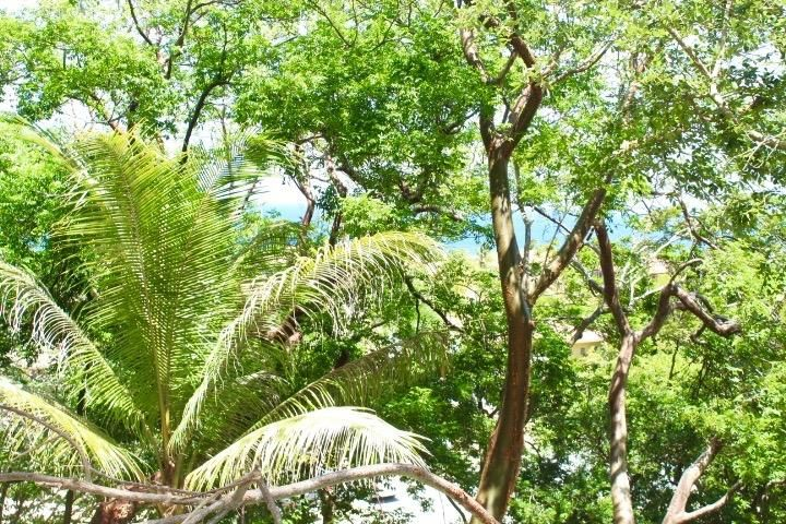 Home Site 125, Parrot Tree Bargain, Roatan,