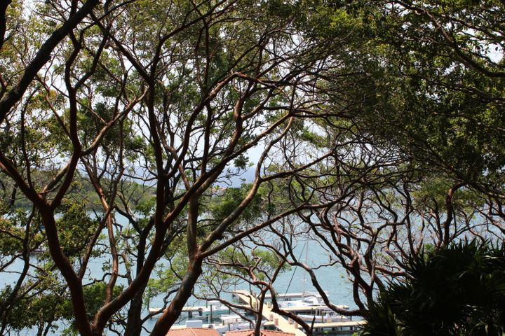 Parrot Tree Plantation, Hillside Village lot # 114, Roatan,