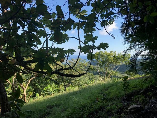 Estate lot over 1/3 acre !, Turquoise Reef Views, Roatan,