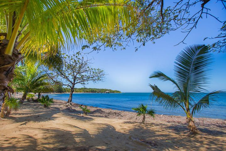 Lush tropical trees and white sand beaches