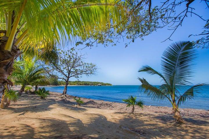 Lush tropical trees and white sand beaches