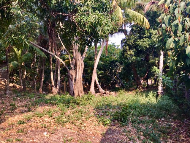 Upper level of lot sea view behind trees.