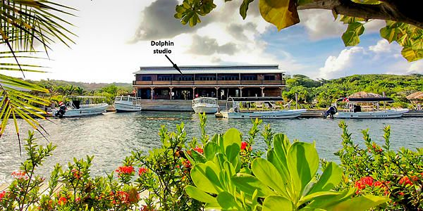 Condos at Barefoot Divers, Dolphin studio condo in the, Roatan,