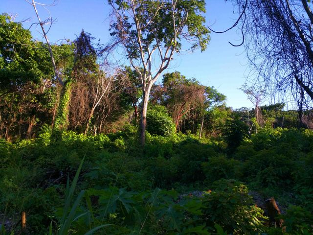 Great land for planting & building your Caribbean get-away.