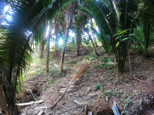 West End, Lot 25 Lenca World Development, Roatan,
