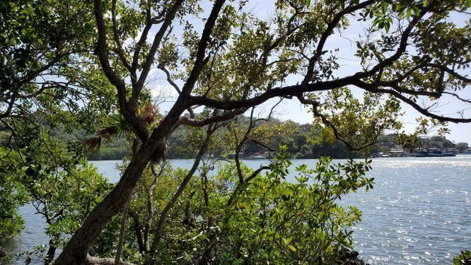 Lot #4, 58 Ft. Waterfront, Roatan,