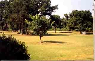 Main photo 7 of sold home at 768  HWY 197 , , AR 72851