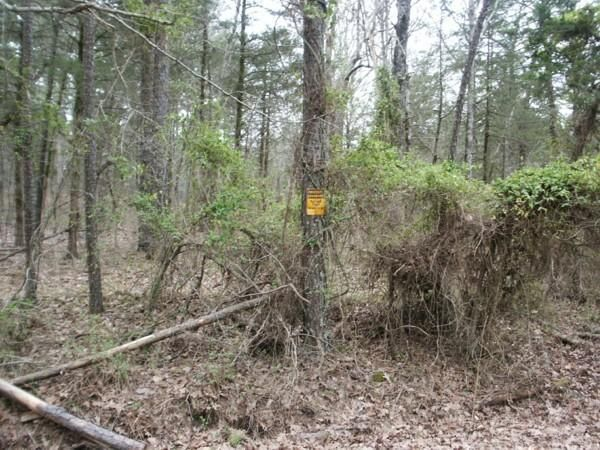 Main photo 11 of sold home at   Highway  307 , Belleville, AR 72824