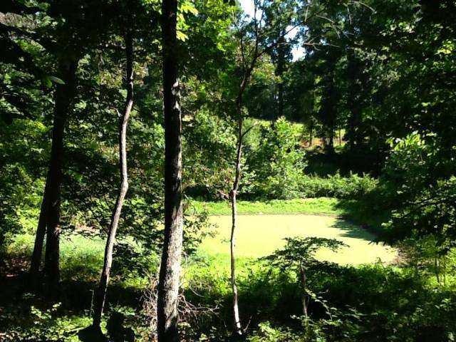 Photo of Parcel 113 Goose Creek Valley RD Montvale VA 24122