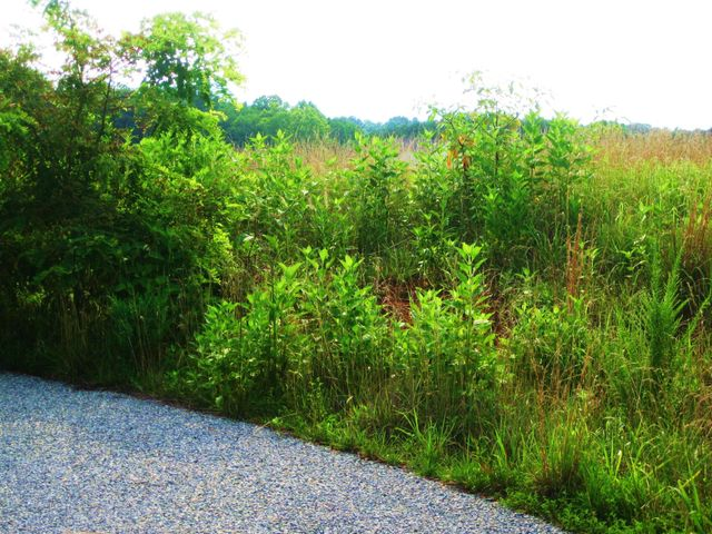 Lot 6 Chapel View LN, Goodview, VA 24095