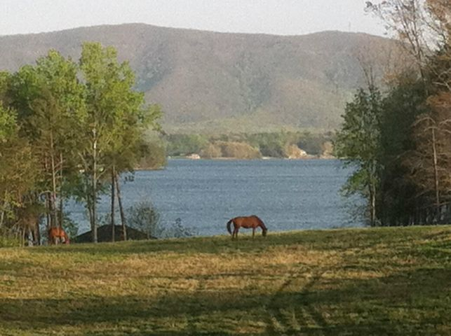 The pasture overlooking lake and Smith Mountain