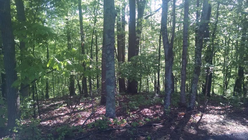 Lot 24 Old Mill DR, Hardy, VA 24101