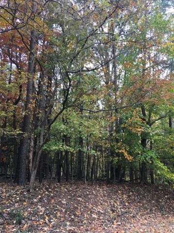 Lot 15 Freeboard DR, Moneta, VA 24121