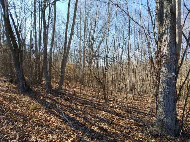 LOT 10 HORSESHOE BEND RD, Goodview, VA 24095