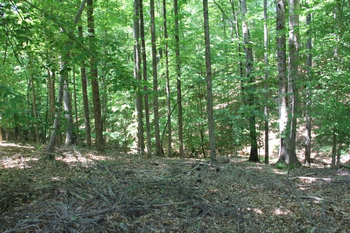 Wooded Waterfront Lot