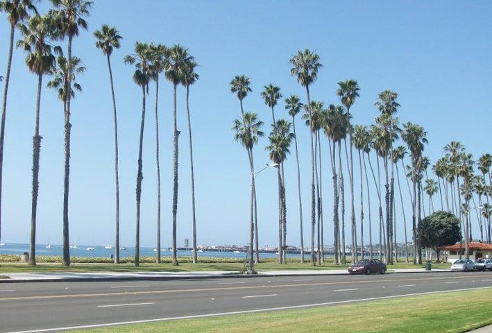 Palm Tree  Cabrillo Blvd