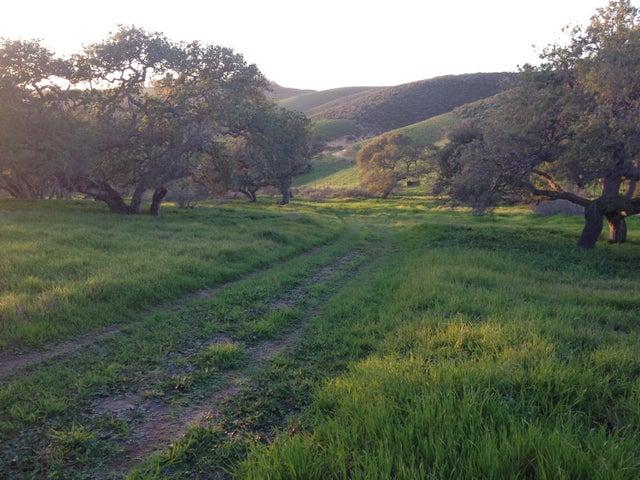 Springtime on the ranch