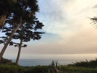 Shoreline Views