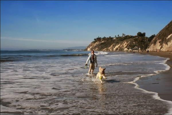 Enjoy everyday with your dog on beach