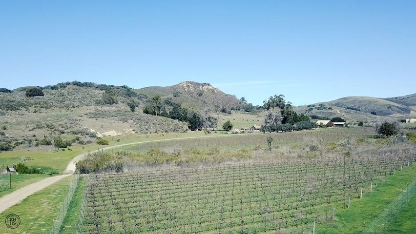 Aerial photo of Pinot Noir