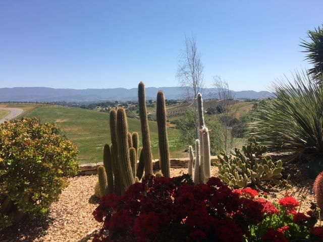 Catus and Mountain View