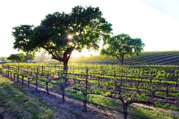 3 oak hap vin 3x5