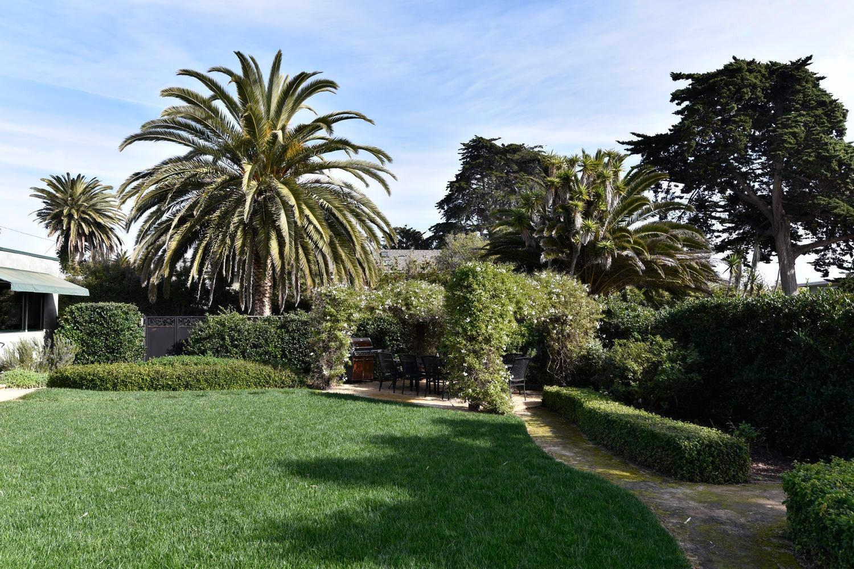 Outdoor Garden Palms 102852