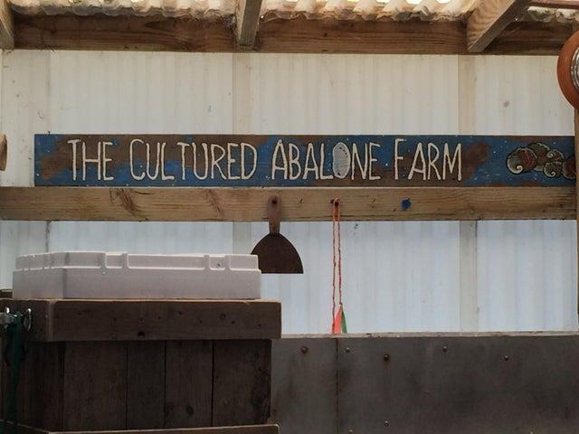 Abalone Farm 4