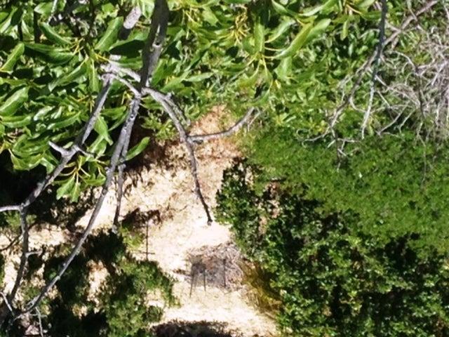 1678 Buena Vista high view to bottom