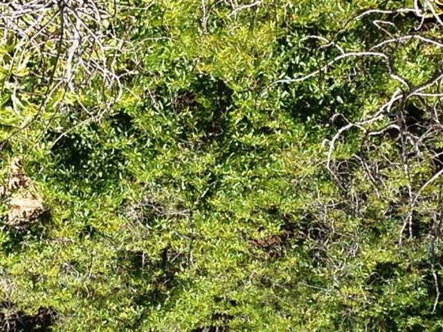 1678 Buena Vista tops of trees