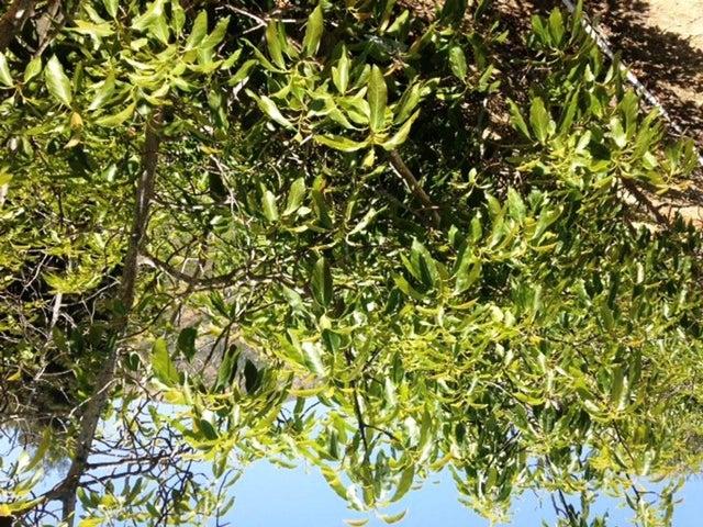 1678 Buena Vista avocado