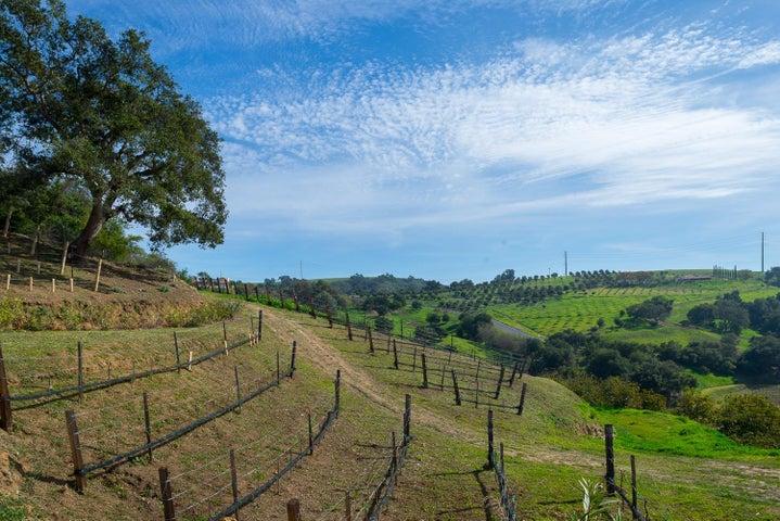 4 Acres of Vineyards