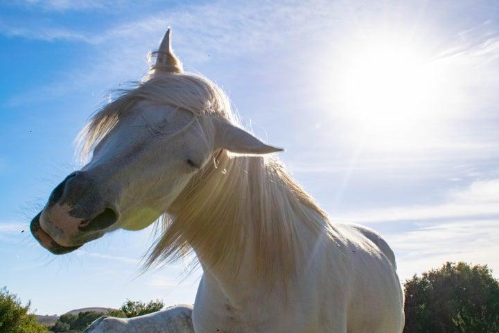 HB Horse (2)