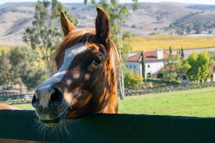 HB Horse (3)
